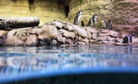 Pinguine und andere Tiere im Underwaterzoo