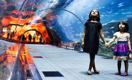 Dubai Aquarium Tickets günstig online buchen