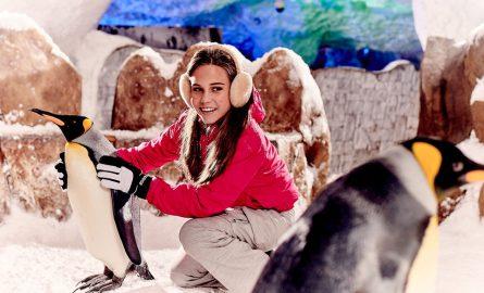 Im Ski Dubai kann man Pinguine streicheln