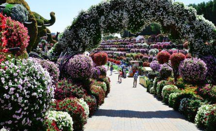 Blumenparadies Miracle Garden