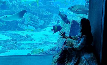 Ambassador Lagoon im Atlantis The Palm
